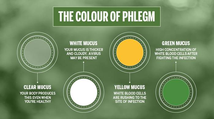 Meaning Of The Colour Of Phlegm Infograph